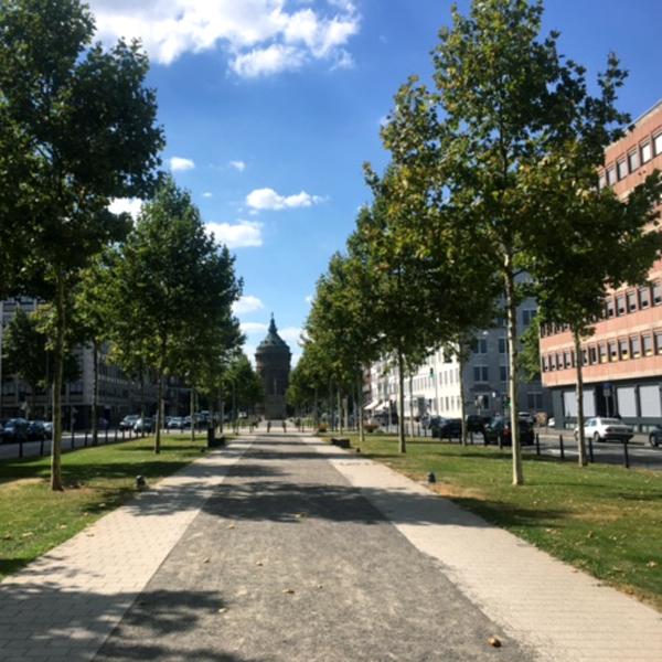 Stadtrundfahrt Mannheim – alle Highlights in einer Tour!